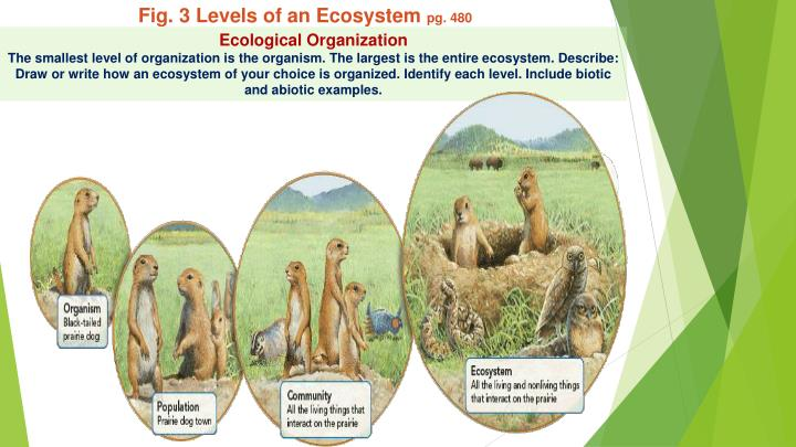 Fig. 3 Levels of an Ecosystem
