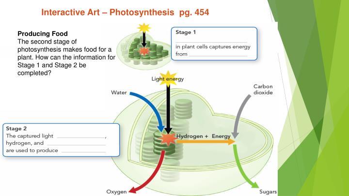 Interactive Art – Photosynthesis  pg. 454