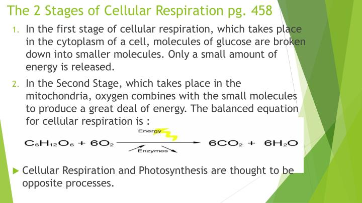The 2 Stages of Cellular Respiration pg. 458
