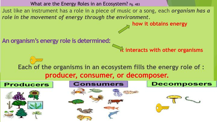What are the Energy Roles in an Ecosystem?