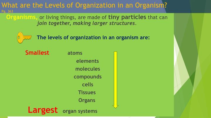 What are the Levels of Organization in an Organism?