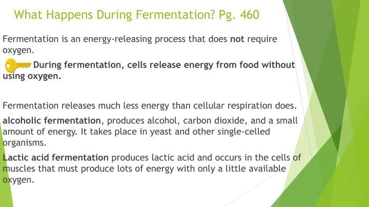 What Happens During Fermentation? Pg. 460