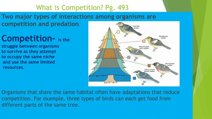 What is Competition? Pg. 493