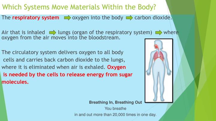 Which Systems Move Materials Within the Body?