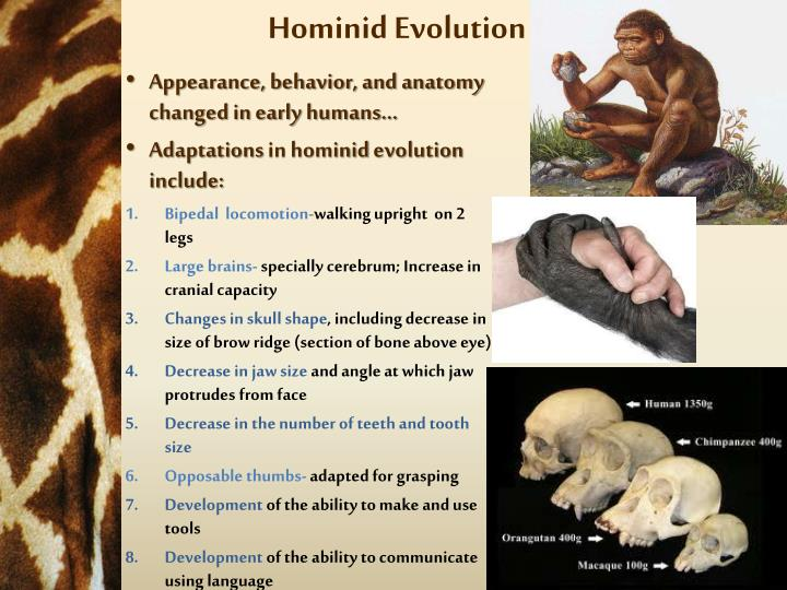 approach essay evolution flesh hominid semiotics sexuality sign Pablo picasso research paper year markus brinkschulte dissertation oral b toothbrush heads comparison essay essay about myself planning and career, approach essay evolution flesh hominid semiotics sexuality sign.
