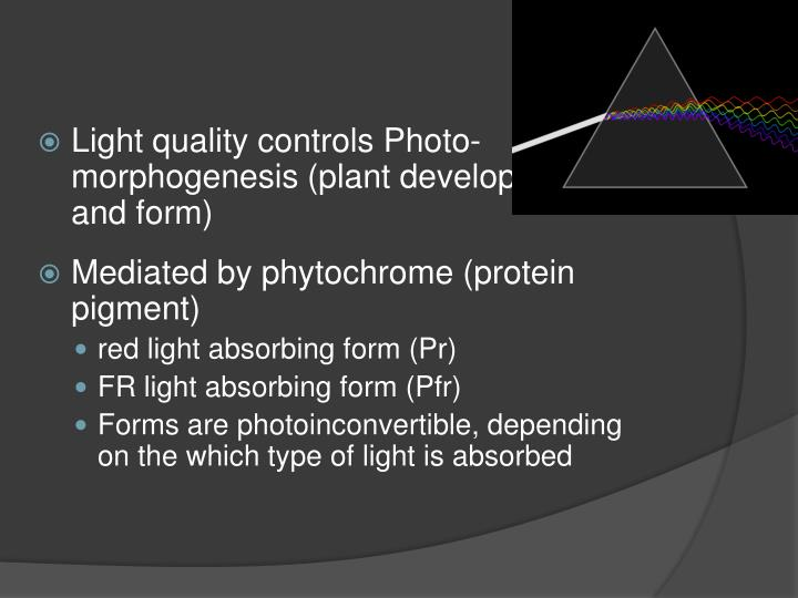 Light quality controls Photo-morphogenesis