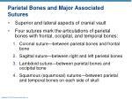 parietal bones and major associated sutures