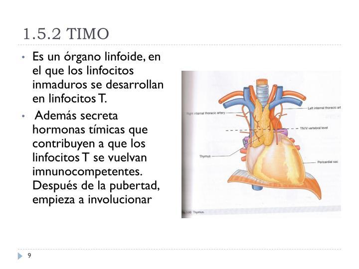 1.5.2 TIMO