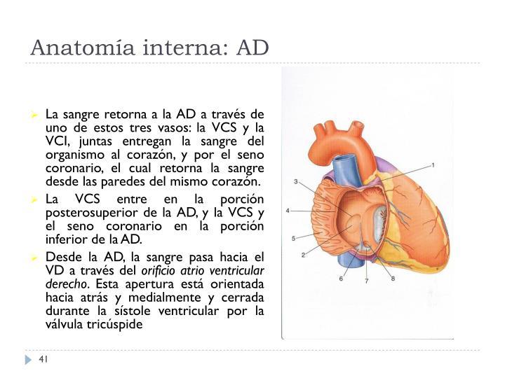 Anatomía interna: AD