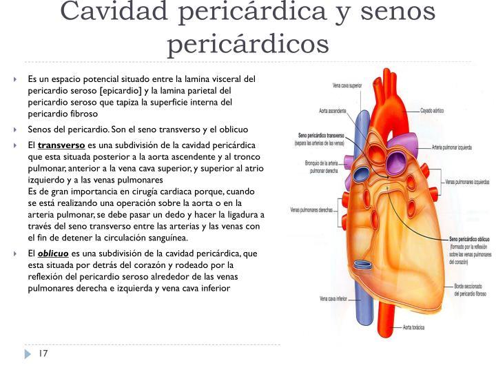 Cavidad pericárdica y senos pericárdicos