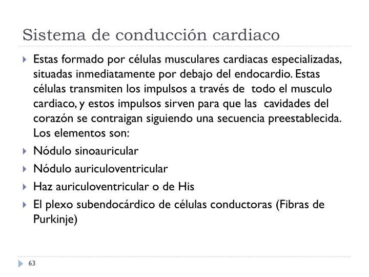 Sistema de conducción cardiaco