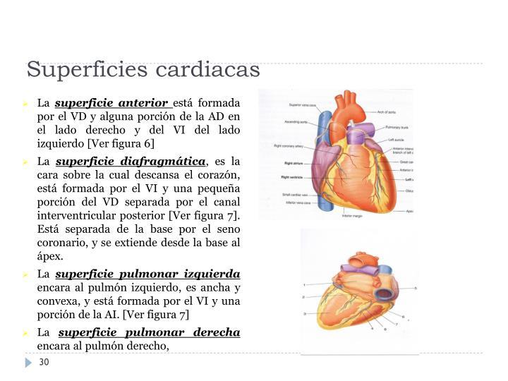 Superficies cardiacas