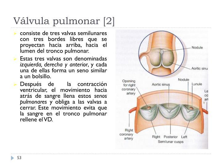 Válvula pulmonar [2]
