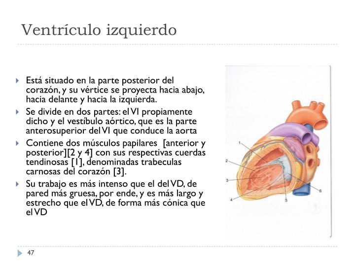 Ventrículo izquierdo