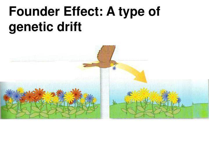 Founder Effect: A type of genetic drift
