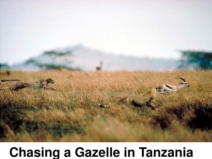 Chasing a Gazelle in Tanzania