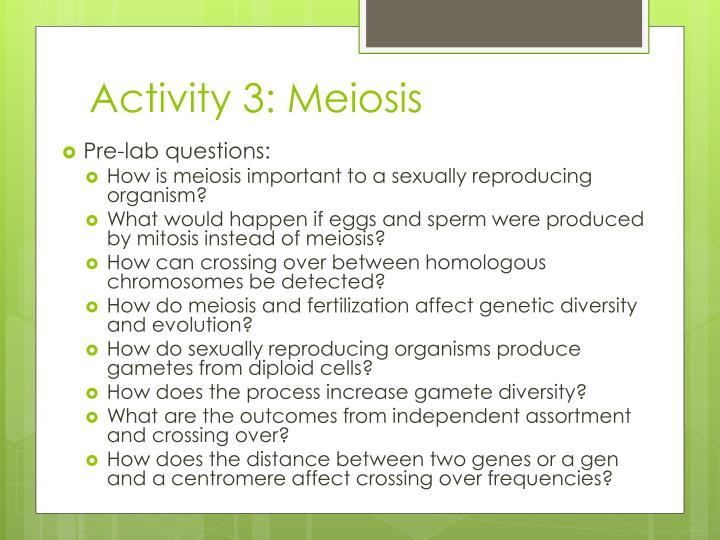 Activity 3: Meiosis