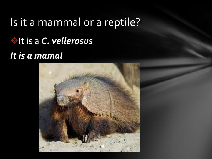 Is it a mammal or a reptile