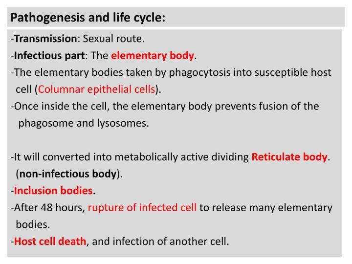 Pathogenesis and life cycle