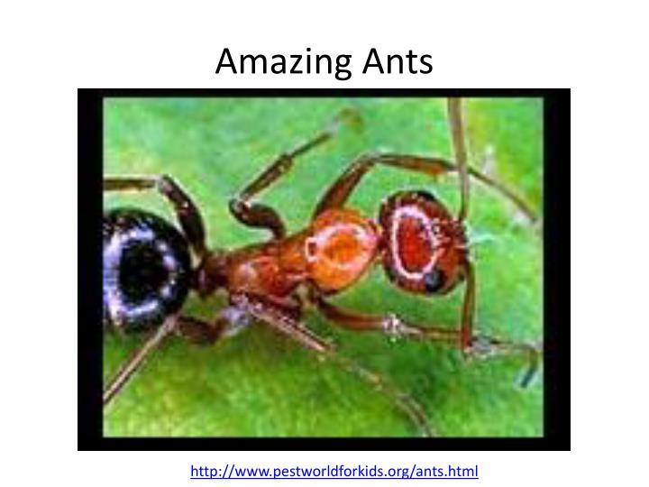 Amazing Ants