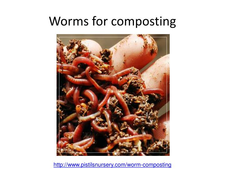 Worms for composting