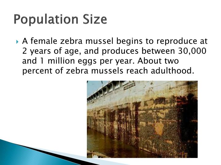 the invasion of the zebra mussels upsets the balance of the local ecosystem This invasion poses many potential threats for native species of fish and mussels, said mark poos, a doctoral candidate and lead author of the researchers' studythe female goby can produce 5,000 eggs per season, and the male dies after spawning.