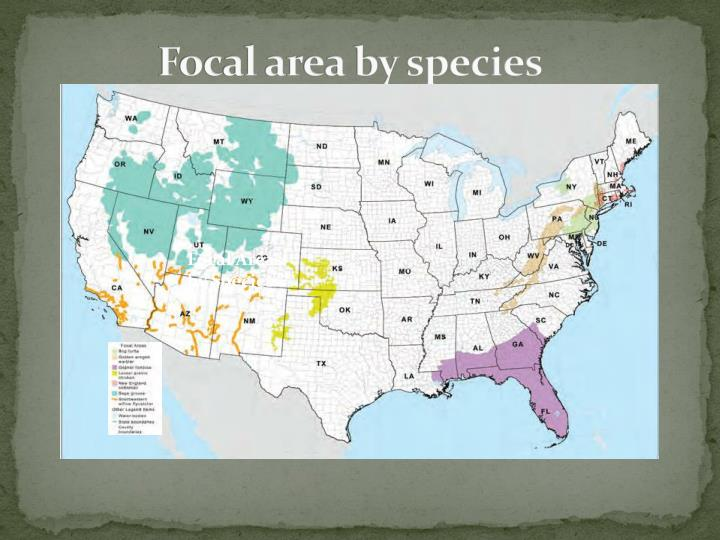 Focal area by species