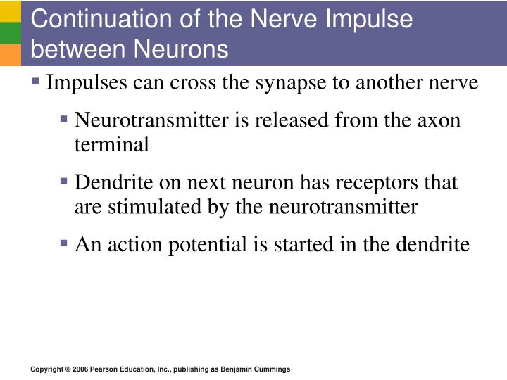 Continuation of the Nerve Impulse between Neurons