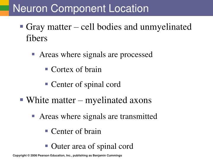 Neuron Component Location
