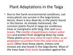 plant adaptations in the taiga