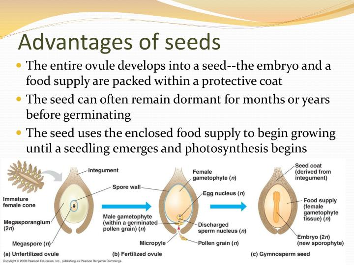Advantages of seeds