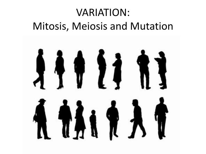variation mitosis meiosis and mutation n.