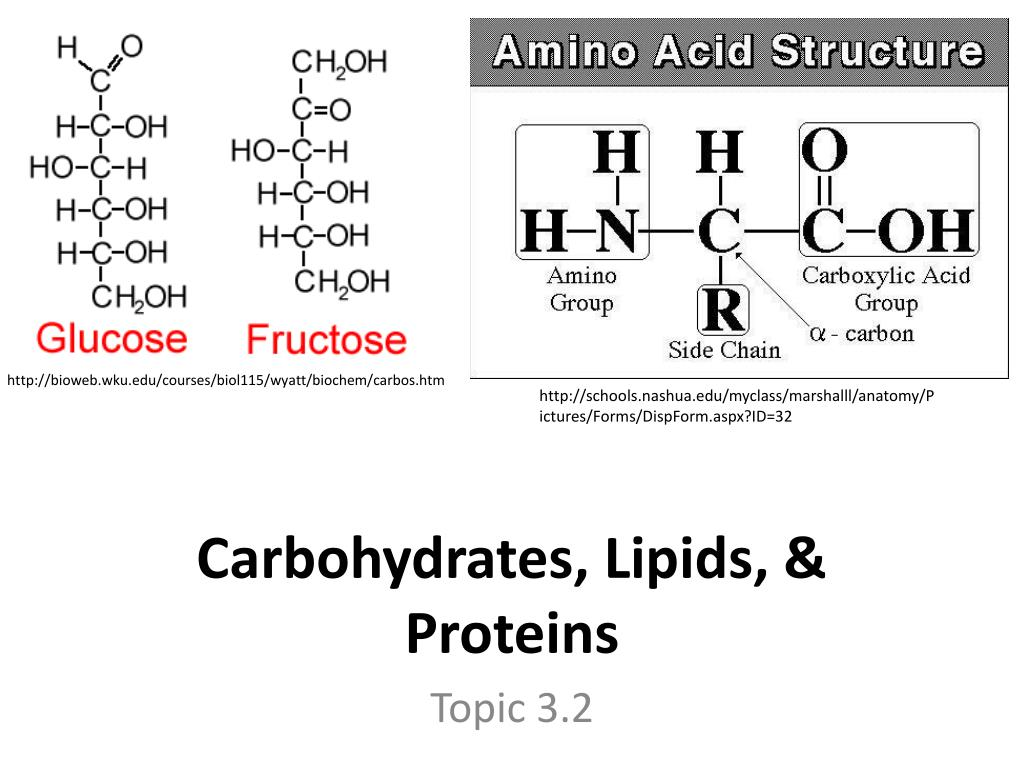 Ppt Carbohydrates Lipids Proteins Powerpoint Presentation Id