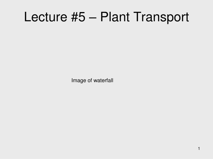lecture 5 plant transport n.