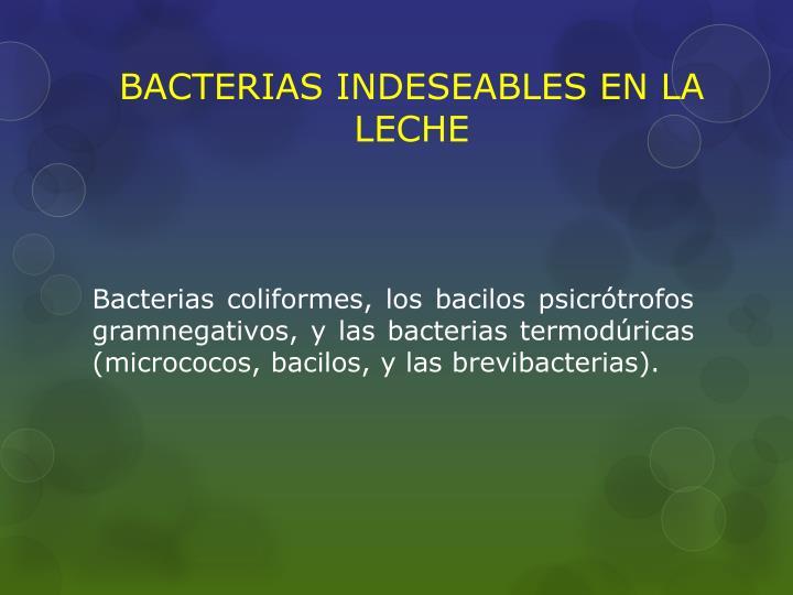 BACTERIAS INDESEABLES EN LA LECHE