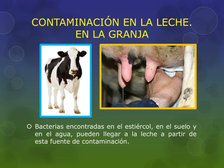 Contaminaci n en la leche en la granja