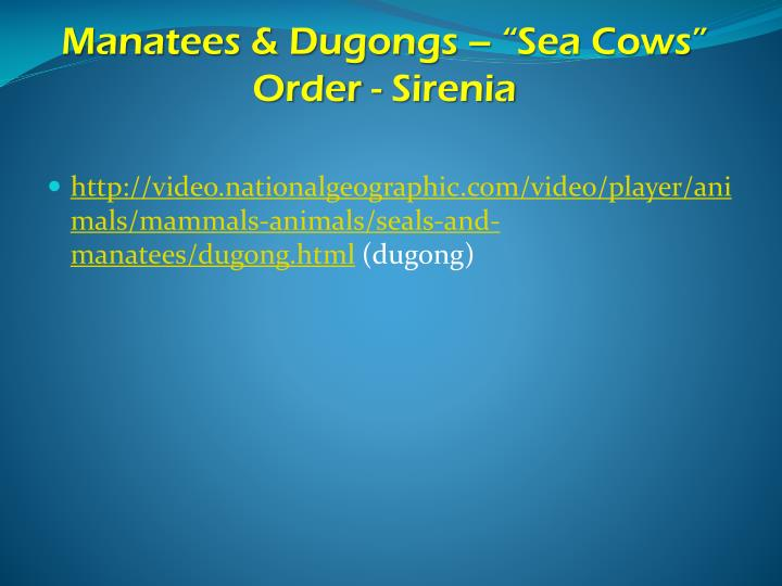"Manatees & Dugongs – ""Sea Cows"""