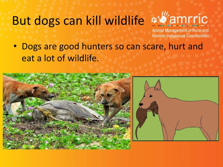 But dogs can kill wildlife