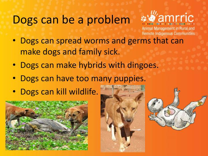 Dogs can be a problem