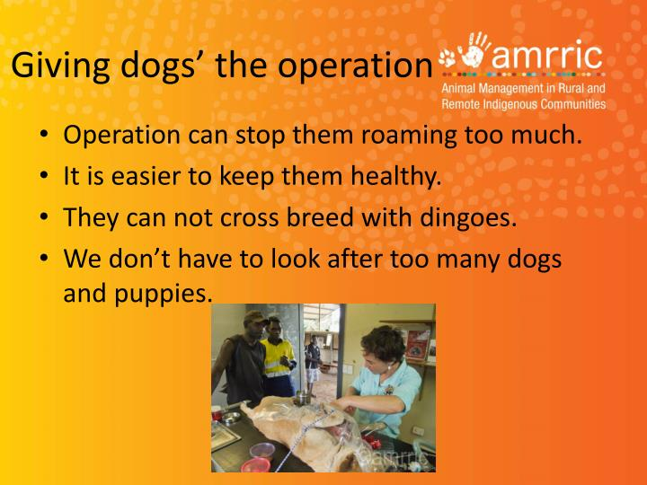 Giving dogs' the operation