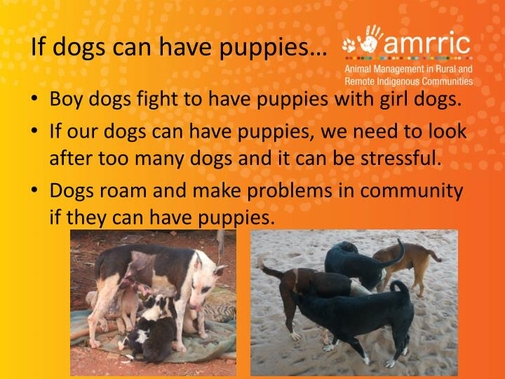 If dogs can have puppies…