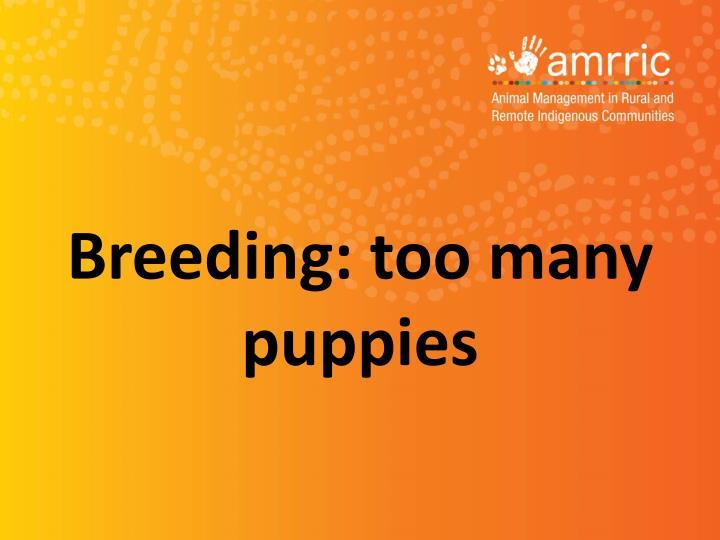 Breeding: too many puppies