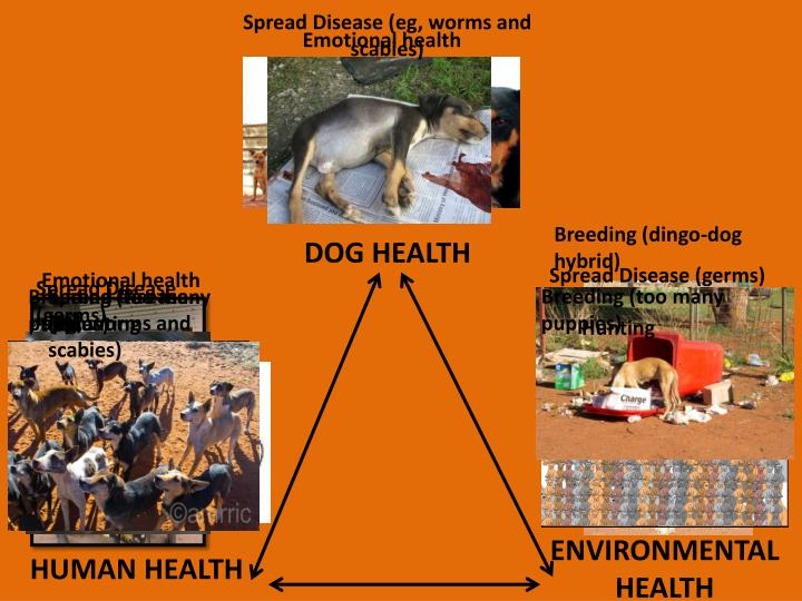 Spread Disease (