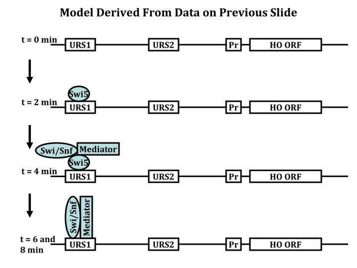 Model Derived From Data on Previous Slide