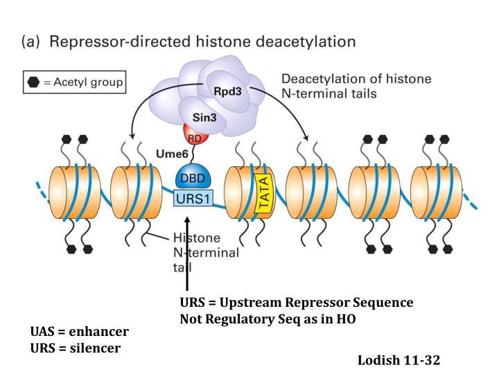 URS = Upstream Repressor Sequence