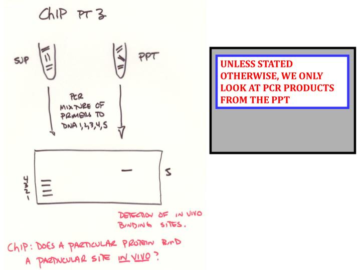 UNLESS STATED OTHERWISE, WE ONLY LOOK AT PCR PRODUCTS FROM THE PPT