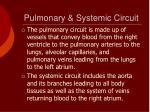 pulmonary systemic circuit