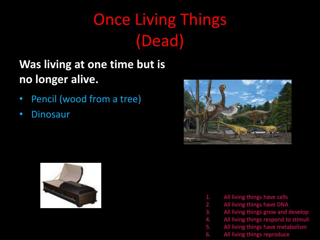 Ppt Living Things Powerpoint Presentation Free Download Id 3068519