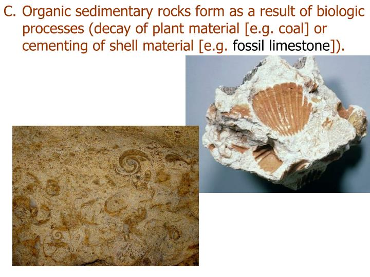 Organic sedimentary rocks form as a result of biologic processes (decay of plant material [e.g. coal] or cementing of shell material [e.g.