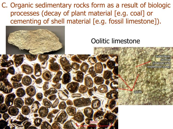 Organic sedimentary rocks form as a result of biologic processes (decay of plant material [e.g. coal] or cementing of shell material [e.g. fossil limestone]).